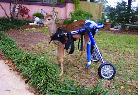 deer with wheelchair
